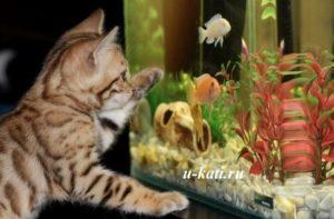 выбор аквариумных рыбок